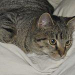 Katze Occupy duldet keine Copycats